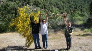 weeds scotch broom