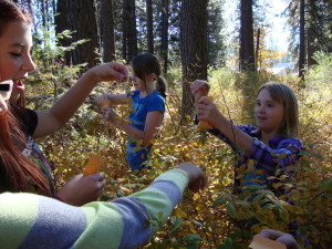 Students from McCloud Elementary School collect choke cherry berries for planting.
